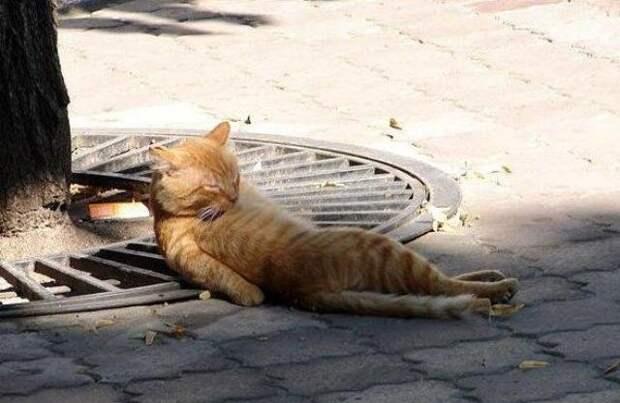 Раскрываем тайну: почему коты так обожают валерьяну