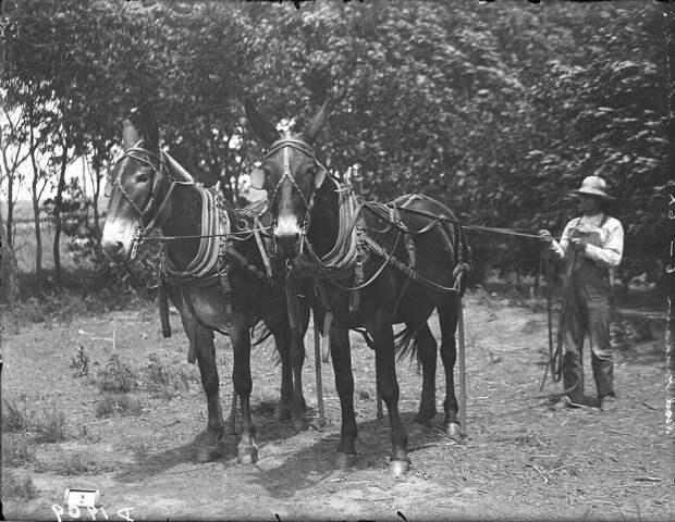 Как поднималась американская целина. Архивные фотографии пионеров Великих равнин конца 19-го века 20