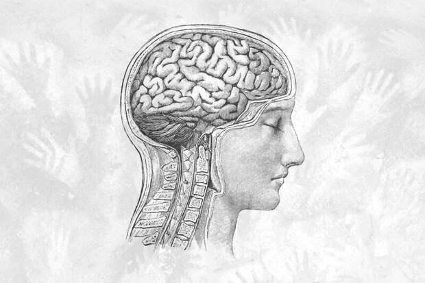 Наш мозг уменьшается в размерах — мы тупеем?