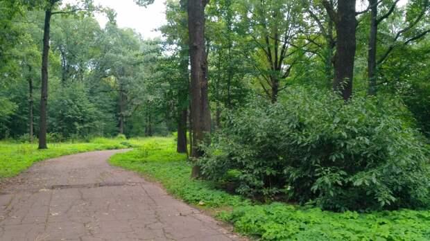 В Ботаническом саду высадят деревья