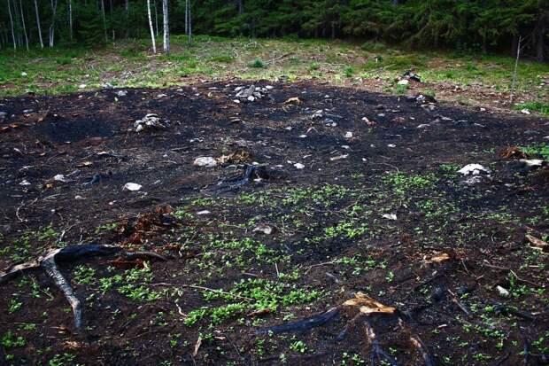 Подсечно-огневая система земледелья