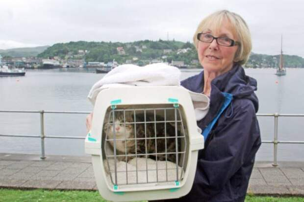 В Шотландии кошка случайно забралась на яхту и проплыла 200 миль
