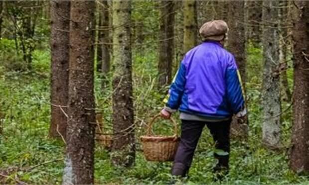 70-летняя кировчанка, собирая ягоды, заблудилась в лесу у Сидоровки
