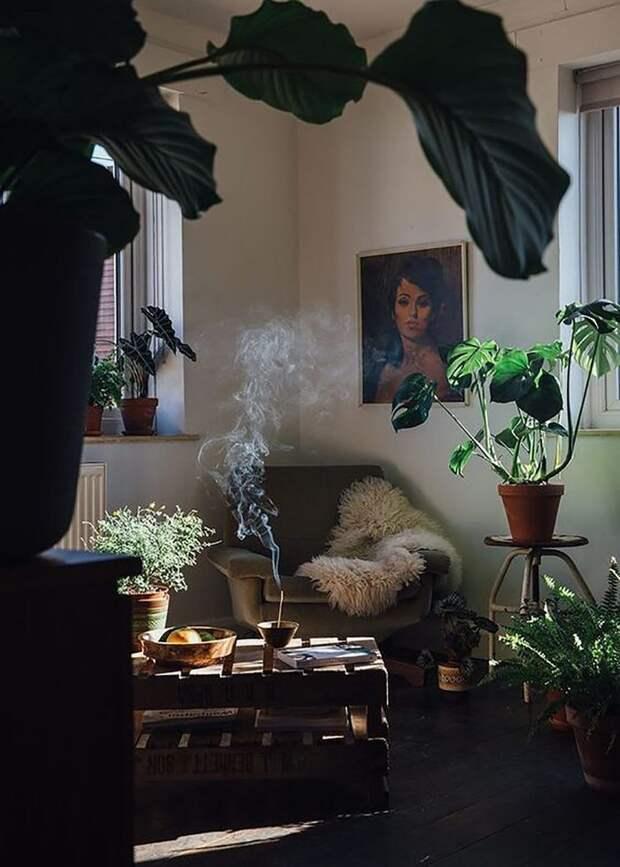 Украшение интерьера большим количество растений