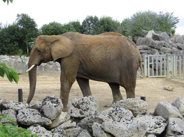 Владелец сафари парка «Тайган» заявил, что слонихи, устроившие драку в казанском цирке, психически больны