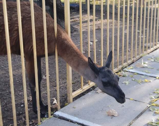 Холода близко: Как зимуют животные в симферопольском зооуголке