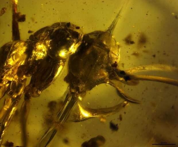 """Адский муравей"" найден в янтаре спустя 99 млн лет"