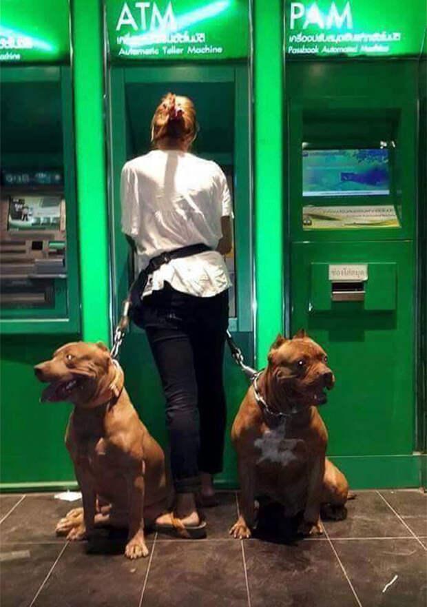 Долго ждать охранников не придется - они будут только рады вечерней прогулке Охранники, банкомат, безопасность, деньги, друзья человека, животные, охрана, собаки