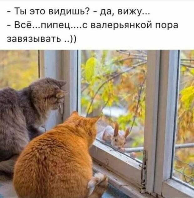Забавные животные, один их вид поднимает настроение)