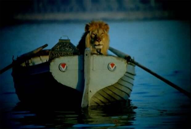 С ними в квартире жили львы: что случилось с семьёй, державшей дома диких зверей