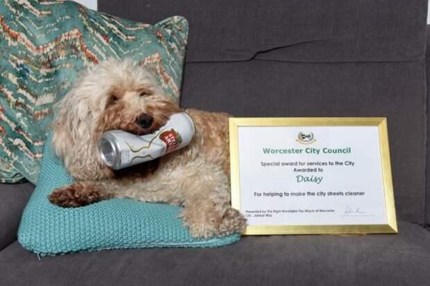 За свое хобби эта собака получила редкую и престижную награду