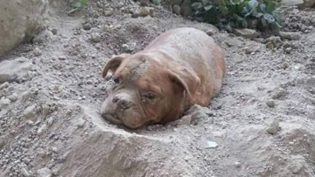 Мужчина заметил собаку, заживо похороненную на пустыре. Она не умерла только благодаря Ему!