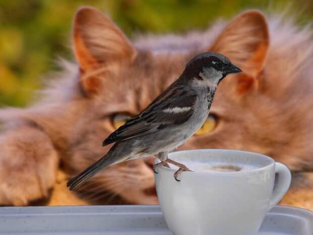 В Удмуртии с 15 августа начинается сезон охоты на дичь
