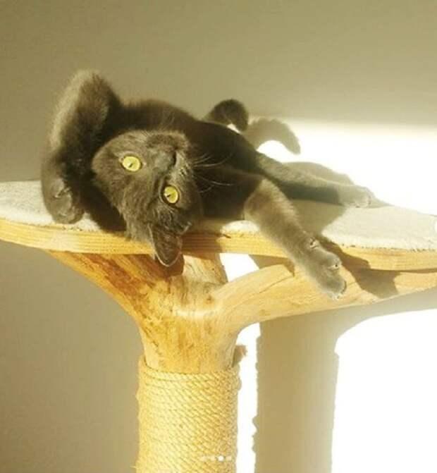 Кот поднял лапы