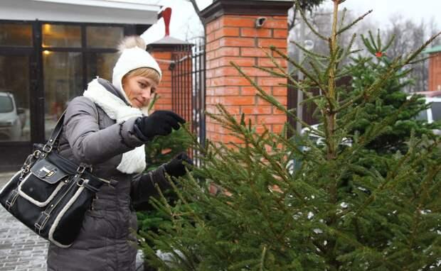 Елочные базары в Одинцово заработают с 20 декабря
