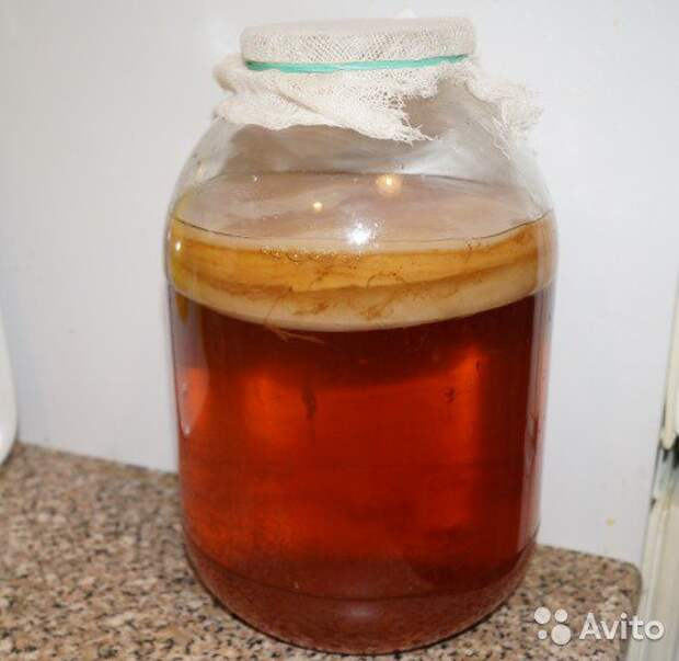 Лечебные свойства чайного гриба
