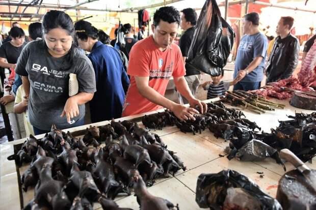 Бубонная чума в Монголии - съели сырое мясо сурка и понеслось