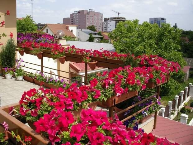 Цветы и растения могут отлично дополнить интерьер небольшого балкона.