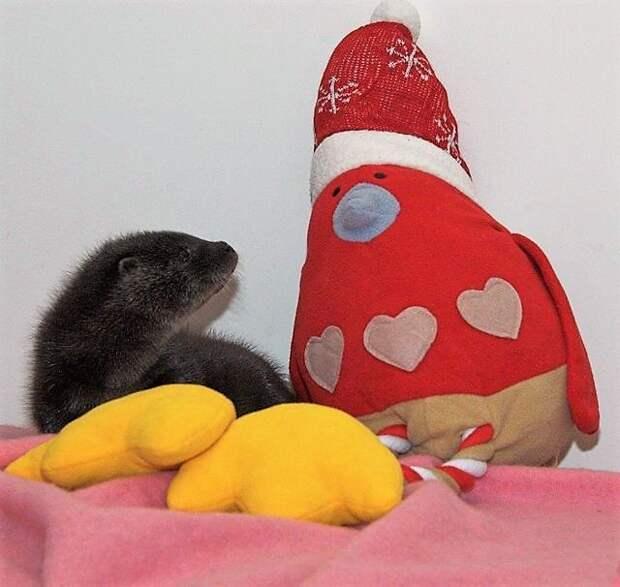 Маленькую выдру спасли из-под колёс! Теперь она веселится с пингвином и планирует забрать его жить в лес…