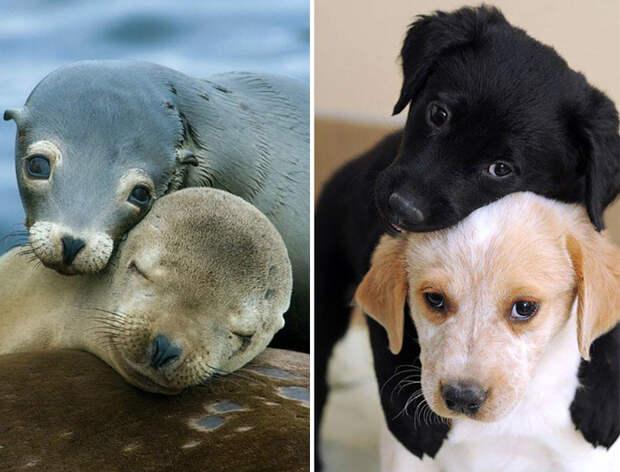 21.  животные, собака, сходство, тюлень
