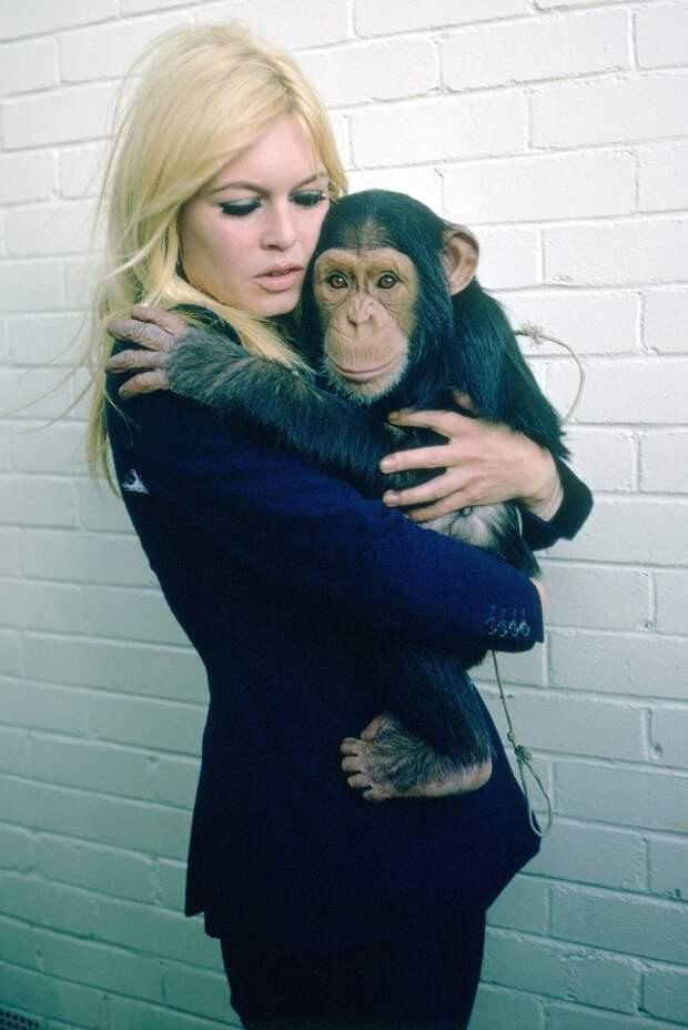 Брижит Бардо и животные (фото): шимпанзе / Brigitte Bardot & animals (Photos): monkey (Chimpanzee)