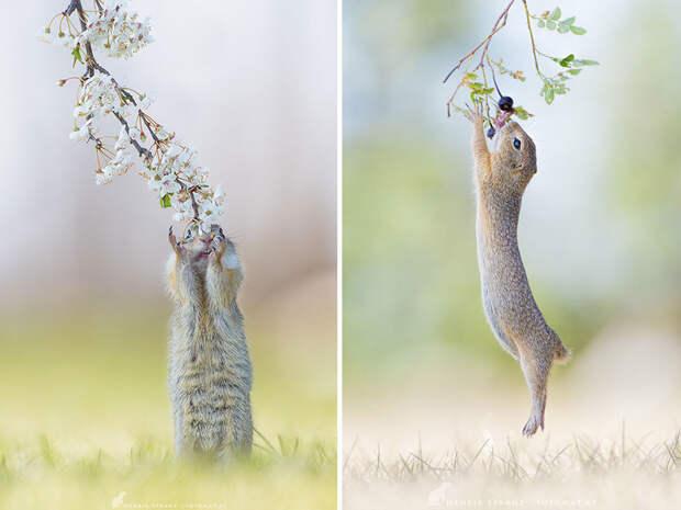Суслики - самые умилительные создания на Земле!