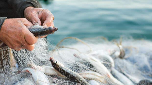 О применении сетей при любительском рыболовстве