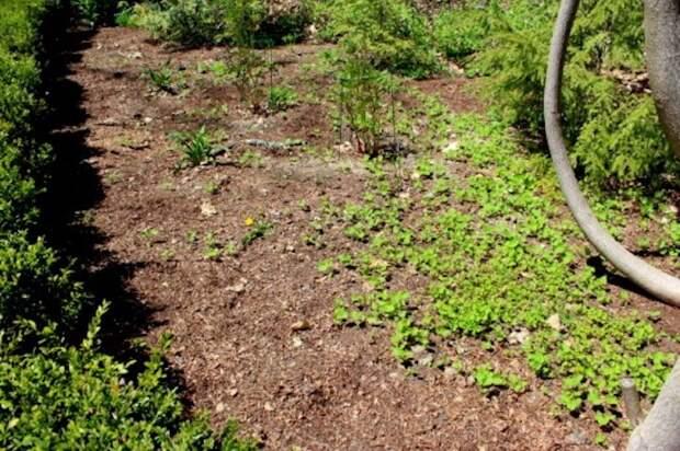 Как справиться с сорняками подручными средствами