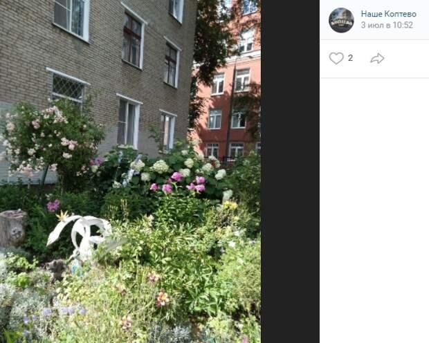 Фото дня: цветущий сад на бульваре Матроса Железняка