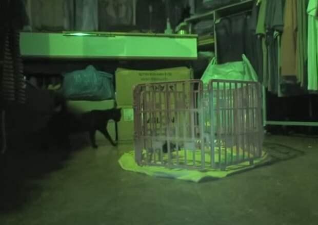 Кошка возле клетки
