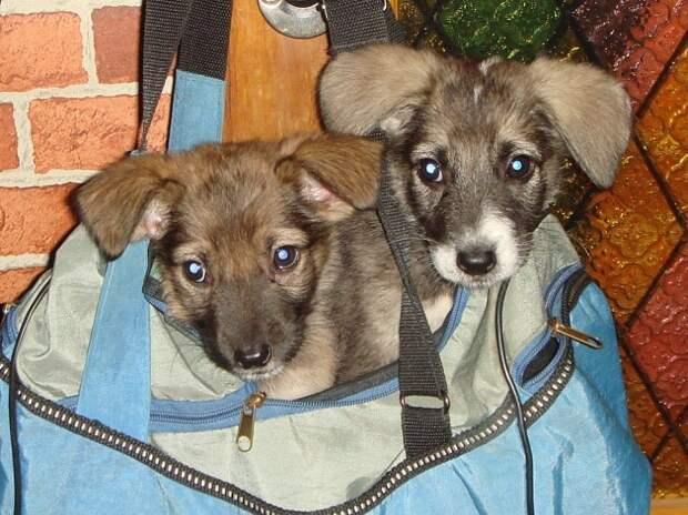 щенки в сумке