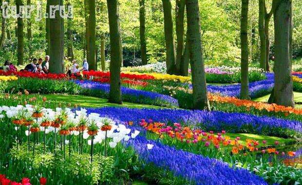Нидерландский парк цветов - аж дух захватывает от такой красоты