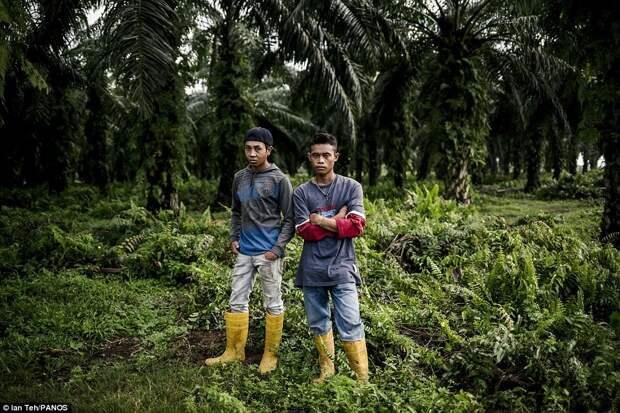 Плантация пальм
