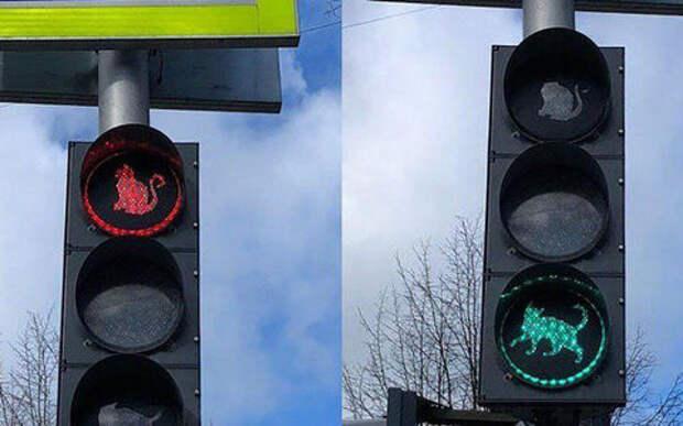 Ми-ми-ми не пройдет: ГИБДД против котиков на светофорах
