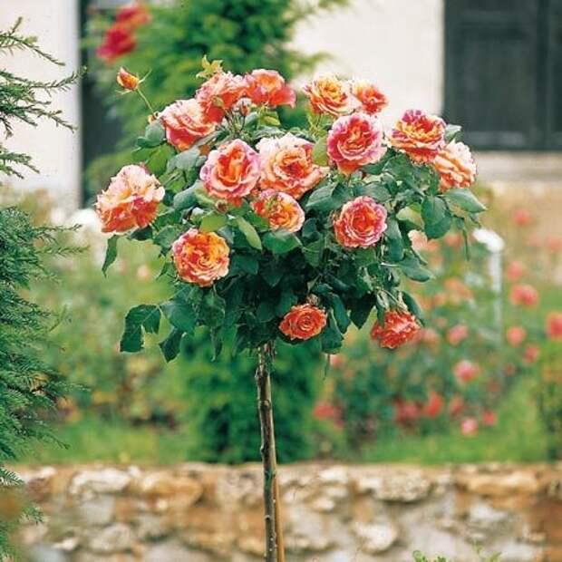 4497432_rosesingardeninspiration33 (450x450, 51Kb)