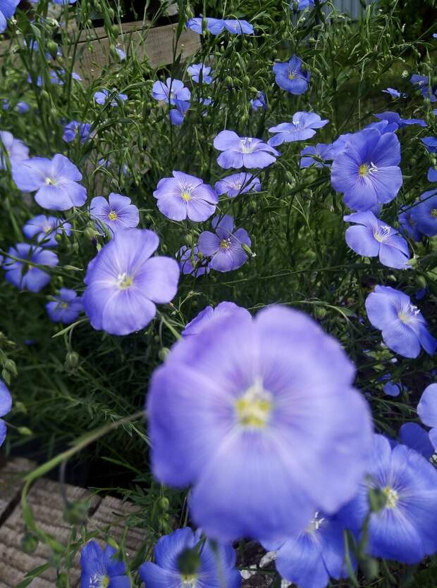 Волшебный цветок на моём пути