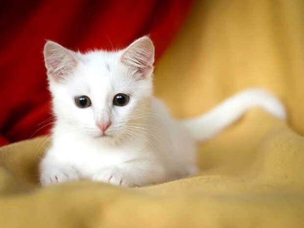 Пятничная кошечка Лиля: белая шубка, светлая душа
