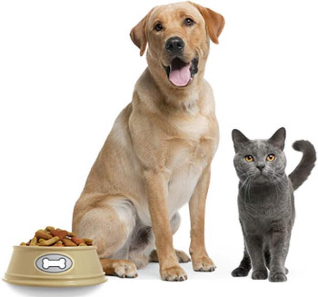 http://www.veterinarka.ru/images/0001articles/1406886301_6dc4.jpg