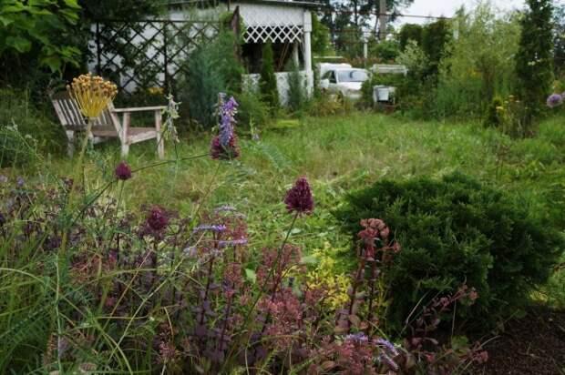 Пергола смягчает переход от домика и хозяйственной зоны к «дикой» части сада с лужайкой и миксбордером