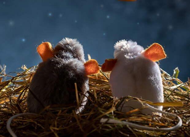 «Роскосмос»: мыши станут первыми «покорителями» Луны