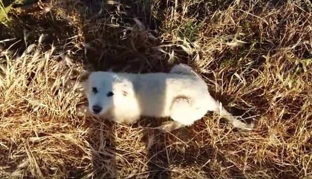 Волнительная радость щенка быть найденным и спасённым