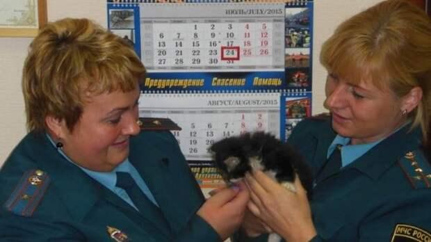 Сотрудница МЧС Архангельской области спасла раненого котенка