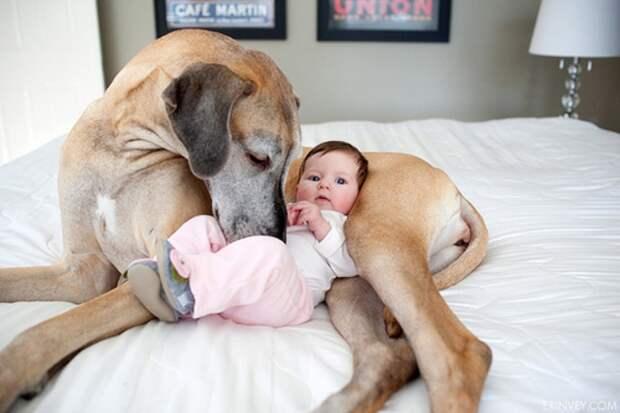 8. Режим дня дети, домашние животные, собака, собаки