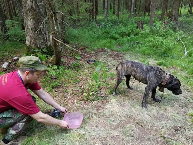 Сергиевом Посаде неизвестные привязали собаку в лесу и бросили мучительно умирать