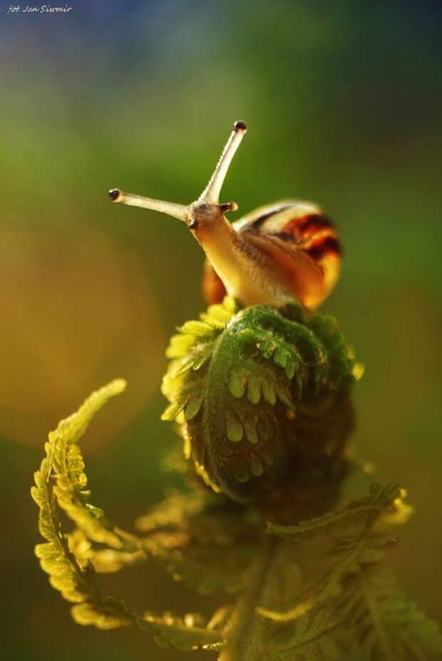ФОТОВЫСТАВКА. Природа в фотографиях Jan Siwmir