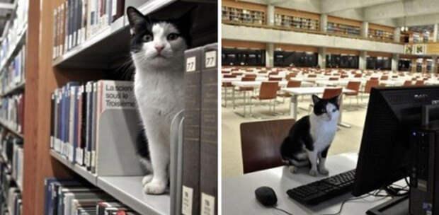 7. А этот кот так много времени проводил в библиотеке, что ему даже выдали читательский билет  год, кот, событие