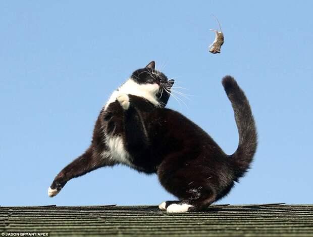 Как схватка Тома и Джерри выглядит в реальной жизни кот, мышь