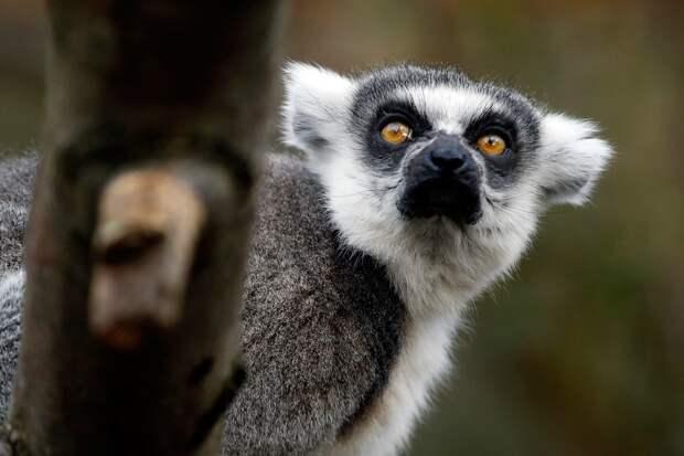 От малого до велика: Лондонский зоопарк представил своих обитателей