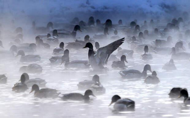 Январский фотомикс: братья наши меньшие животные, пингвины, сова