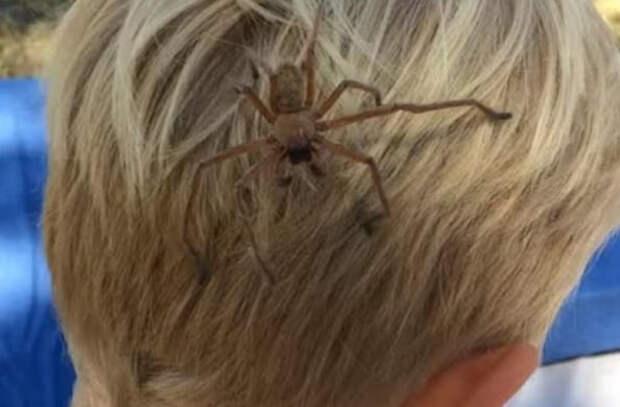 Мальчик из Австралии подружился с пауком